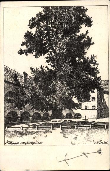 Seidl, Ulf, Millstatt am See Kärnten, 800 jährige Linde