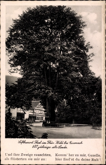 Bad Thal Ruhla Thüringen, Gasthaus zur Linde, 600 Jahre alte Linde