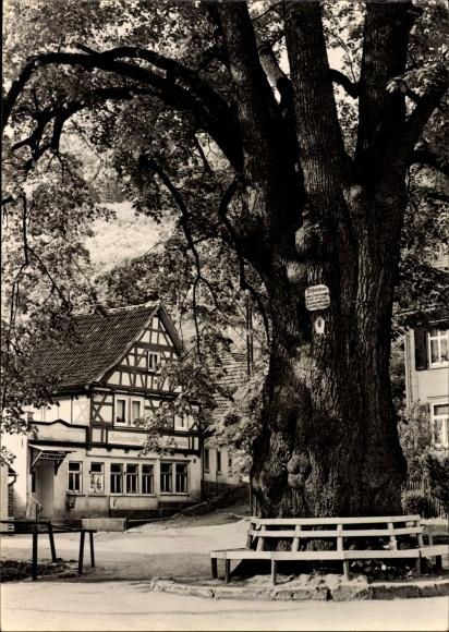 Thal Ruhla im Wartburgkreis Thüringen, 600jährige Linde, Konsum Lebensmittelladen