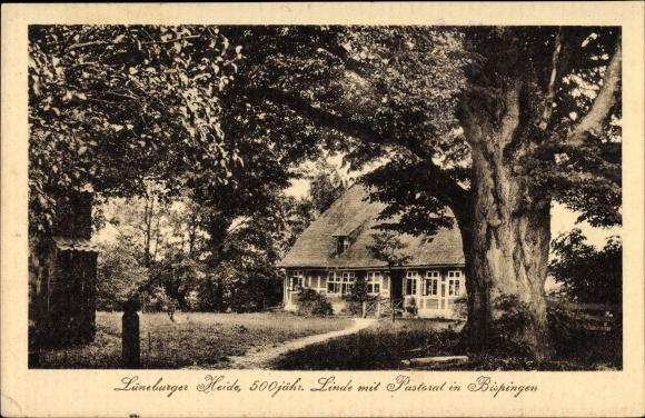 Bispingen in Niedersachsen, Linde mit Pastorat